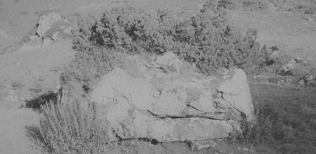 0033_quer_stein_krokodilgrau_phSc-scaled